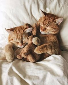 Time for a Kitty Nap!  Adorable!!❤❤❤❤❤kitties!!!!!