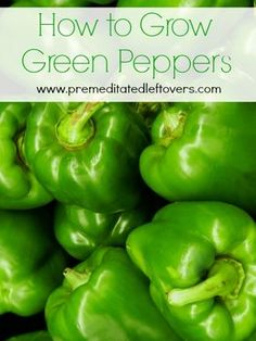 How to grow bell peppers - tips for growing peppers from seed, how to transplant peppers, and how  to harvest bell peppers.