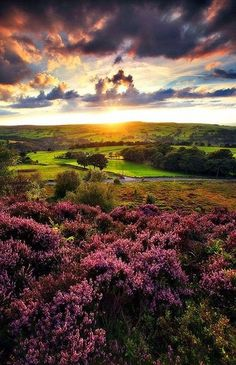Sunset In Halifax, England
