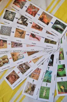 Wide range of animal life cycle photo sequences - free. Nice photos. Very useful.