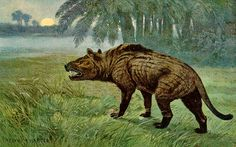 Hyaenodon by Heinrich Harder (1858-1935)