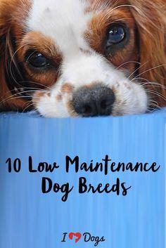 Dog Breeds 47287864822575123 In 2020 Friendly Dog Breeds Low Maintenance Dog Breeds Dog Breeds Medium
