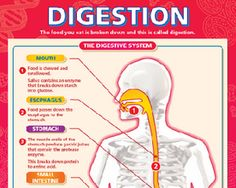 4 Tips for Improving Digestion