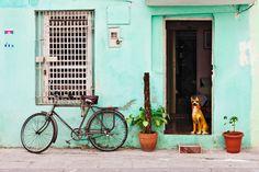 Casa a Cuba Facciata Azzurra con Bicicletta Vintage e Cane