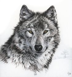 Wolf ink and colored pencils 22 x 22 cm www.nicolejahan.com