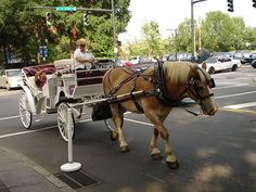 Ban Cruel and Deadly Horse-Drawn Carriage Rides