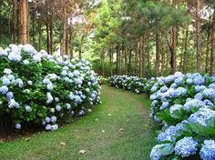 Resultado de imagem para paisagismo com chafariz de jardim