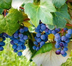 10 beautiful wineries in Indiana.