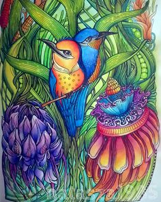 Instagram Done A page from @zifflin #manicbotanic #derwent #inktense #coloringbook #colors #colorful #colorp