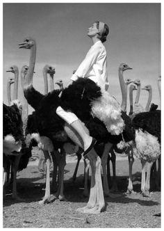 Wenda Parkinson in South Africa 1951... I wanna ride an ostrich...