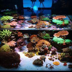 ***** Aquarium Setup, Marine Aquarium, Reef Aquarium, Marine Fish Tanks, Marine Tank, Saltwater Aquarium Fish, Saltwater Tank, Tank Design, Water Life