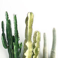 PLANT POWER!  Inspo: