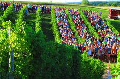 Harvest Stompede http://www.runnersworld.com/bucket-list-races/bucket-list-10-races-for-wine-lovers/slide/6