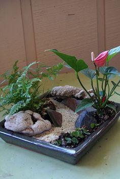 tropical plant fairy garden