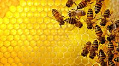 Afbeeldingsresultaat voor honeycomb wallpaper hd