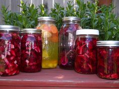 Beet Ferments.  Article + recipe    Due to the industrialization and pasteurization of our food system, we rarely consume fermented foods or use fermentation as a method of preservation. And because of that, we miss out on the added benefit of healthier digestion and boosted immune function through our food.