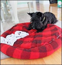 The Adventures of Ranger - the scottie pup: Woofless Wednesday - Redecorating