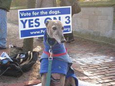 Flashback: Introducing GREY2K USA political campaign to end dog racing nationwide! https://www.youtube.com/watch?v=SJZUwwoRlhc…