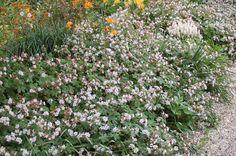 Comment choisir les meilleurs couvre-sols persistants, pour l'ombre, pour les terrains lourds, calcaires, secs... on vous dit tout!