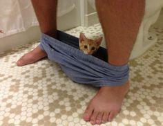 Questi gatti non si preoccupano del vostro spazio personale. Sebbene alcuni proprietari ricorrano a rimproveri e grida, sanno bene che sono completamente