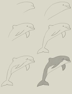 Simple to Draw Dolphin Step by Step | how to draw dolphin How to draw dolphin