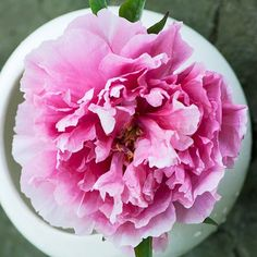 Grow tree peonies and enjoy some of the most opulent flowers the garden has to offer. Check out these top picks!