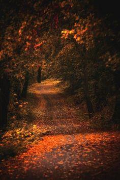 Autumn at night....