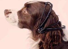 Dog translation device, No More Woof.