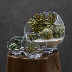 Tilt Bowl Terrarium