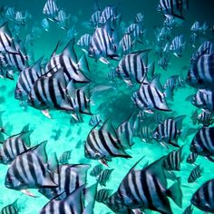Bahamas, snorkeling