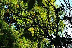 """Olhares do avesso: Soterra a Terra """"contaminada culpa de desculpas elevando a mortandade expulsa as vítimas em punição severa soterra o levantar."""" """"contaminated excuses guilt raising the mortality expelled victims in severe punishment buries the rise. """" http://olharesdoavesso.blogspot.com.br/2015/11/soterra-terra.html #Poesia #poetry #rio #river #mar #sea #lama #mud #soterrar #overwhelm #blog #blogger #olharesdoavesso #bomdia #goodday #goodmorning"""
