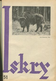 "Iskry No. 51, 10.12.1932, Y. X Photograph on the cover: ""Król Białowieży: Żubr"""