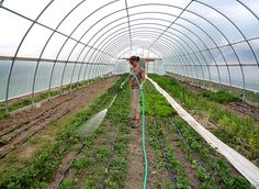 Get back to nature on an organic farm by WWOOFing your way around the world. 4 -6 hours a day gives you room and board!