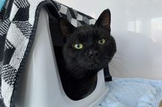 Find a cat | Wood Green - The Animals Charity