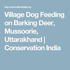 Village Dog Feeding on Barking Deer, Mussoorie, Uttarakhand Mussoorie, Dog Feeding, Conservation, Deer, India, Conservation Movement, Canning