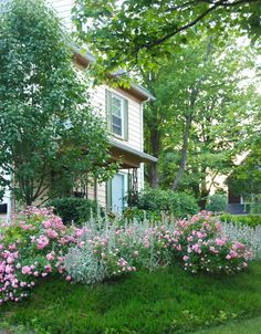 Wife, Mother, Gardener: Roses in the Hill Garden