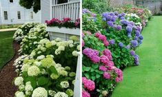 If You Use Vinegar in the Garden These 12 Miracles Can Happen Hydrangea Landscaping, Backyard Landscaping, Landscaping Ideas, Patio Ideas, Outdoor Ideas, Natural Landscaping, Pool Ideas, Backyard Ideas, Outdoor Spaces