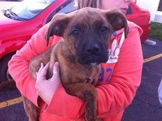 Hi my name is Gretel. I'm available for adoption through POET animal rescue. We're on facebook! www.facebook.com/POETAnimalRescue