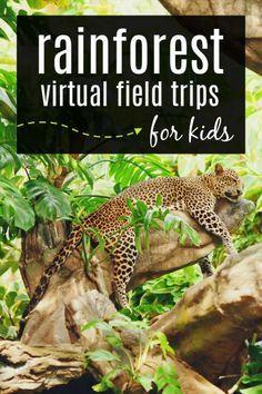 Rainforest Activities, Rainforest Theme, Rainforest Animals, Jungle Animals, Science Activities, Rainforest Facts For Kids, Rainforest Project, Science Crafts, Science Fun