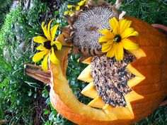 Fall Pumpkin Bird Feeder ≈≈ cute, but pumpkin will go bad quickly...when you harvest SUNFLOWERS..Cut an extra long stem..while still green. turn the sunflower over, bend stem over, back into the flower head to form  handle...then you can hang,and birds can eat the sunflower seeds...naturally gorgeous!