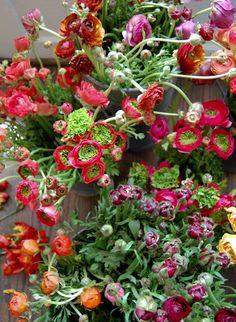 we like it wild: san francisco flower & garden show | Design*Sponge