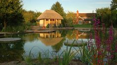 Chlorine free natural swimming pool.  How pretty! BIOTOP  Natural pools