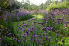 A mono planting of Verbena bonariensis at Coolaught Gardens & Garden Centre in Co Wexford, Ireland. Meadow Garden, Garden Cottage, Dream Garden, Verbena, Landscape Architecture, Landscape Design, Garden Design, Purple Perennials, Purple Garden