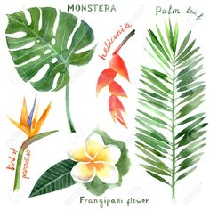 Hand Drawn Watercolor Tropical Plants Royalty Free Cliparts, Vectors, And Stock Illustration. Image 33817427.