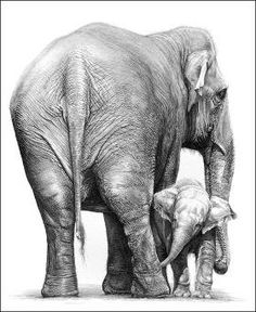 This Photo was uploaded by buyoncegivetwice. Asian Elephant, Elephant Love, Elephant Art, Animal Sketches, Animal Drawings, Art Drawings, Drawing Drawing, Pencil Drawings, Elephant Anatomy