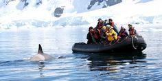 Antarctica Classic Air-Cruise 7 Days