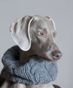 cowl dog :)