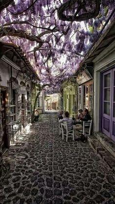 등나무 in 그리스