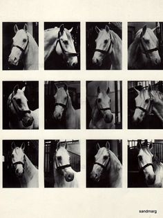 Lipizzaner Horses 1960s The Spanish Riding School of Vienna
