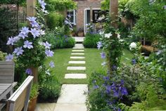 Pretty town garden with pergola and clematis